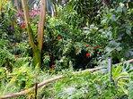 Ho'ohauoli is surrounded by lush jungle on both sides.