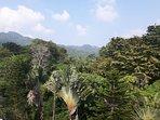 Panoramic rain forest views behind the villa