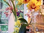 our hobby is to grow orchids and cymbodiums