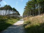 Walking + Bike Trails through the forest at Pembrey Country Park