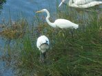 Birds of Sanibel
