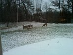 The deer in winter off the deck .The spectacular  4 seasons of Michigan offer year round beauty.