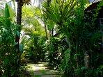 Our tropical garden