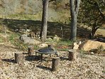 Small Firepit or Large Firepit