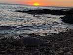 Turtles frequent our closest beach each sunset.
