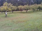 Other side of cabin..orchard