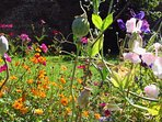 Country flowers in the walled garden, an ideal place to relax and enjoy
