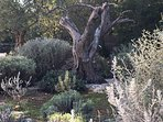 hot and cold shower under the olive tree