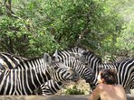This is what Tshwarelano (the gift that keeps on giving) is all about. Getting up close with animals