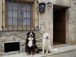Bienvenidos a la Casa de elsoldelasmascotas