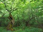 Un bosque cercano