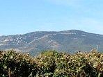 La mont Alaric