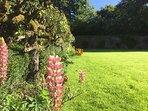 Summer flowers in the walled garden.