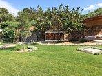 porzione di  parco con tipico albero di sughero sardo e albero di ficus