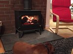 Happy vizsla in front of our wood burner!