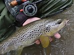Brown Trout caught on worm