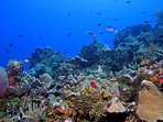 Explore the reef surrounding Roatan - look but don't touch!