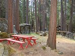 Great area under the cedar and pine trees for children to enjoy some crafts, snacks and lunch.