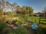 Beautiful herb and vegetable garden