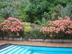 Woodlands Estate's lush pool side gardens let you enjoy the tropics while swimming.