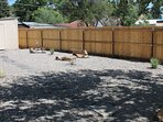 Great fenced in backyard-perfect for kids and well-behaved pets!