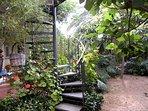 Daydream in your subtropical garden