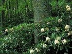 Beautiful Native plants throughout property