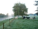 De rivier en de weide met het vee. Het is najaar. De mist hangt over het land.