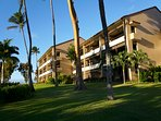 Welcome to Kaanapali Royal!