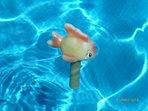 Fish Thermometer in Pool.