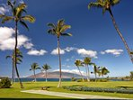 Beautiful grounds at the Kihei Surfside