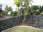 Yard surrounded by lava rock wall