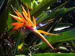The grounds are stunning. Tropical flowers and fruit trees abound.