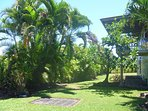 Large, sunny yard with tropical plantings