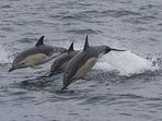 So much to do here - take a local Dolphin Safari in the Marine Area of Special Conservation
