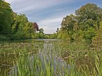 Walk through our woods to the One Arch Bridge at Bosherston Lily Ponds