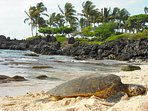 Honu Resting at Kukio Beach, just downhill from Bears' Place, next to Four Seasons Resort.