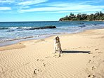 Safe swimmimg south end of Culburra Beach ,Pet friendly