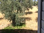 View from Bedroom Two over the Olive Groves