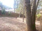 Large fence back yard.