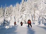 Bring your Snowshoes and walk around or at The National Mauricie Park