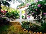 Mature natural sub-tropical garden