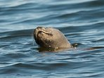 Many Seals, often present opposite the house