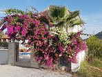 Bougainvillea over the archway entrance to no 2