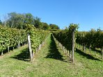 Take a relaxing walk through the vineyards.