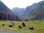 No visit to SW France is complete without exploring the Pyrenees.