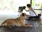 In the meditation pavilion. The dogs are a great source of affection, relaxation and healing.