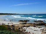Asilomar State Beach and Conference Center - a half-mile away