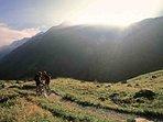 Enjoy the incredible mountain biking trails in Revelstoke