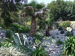 Ventnor Botanic Gardens Isle of Wight